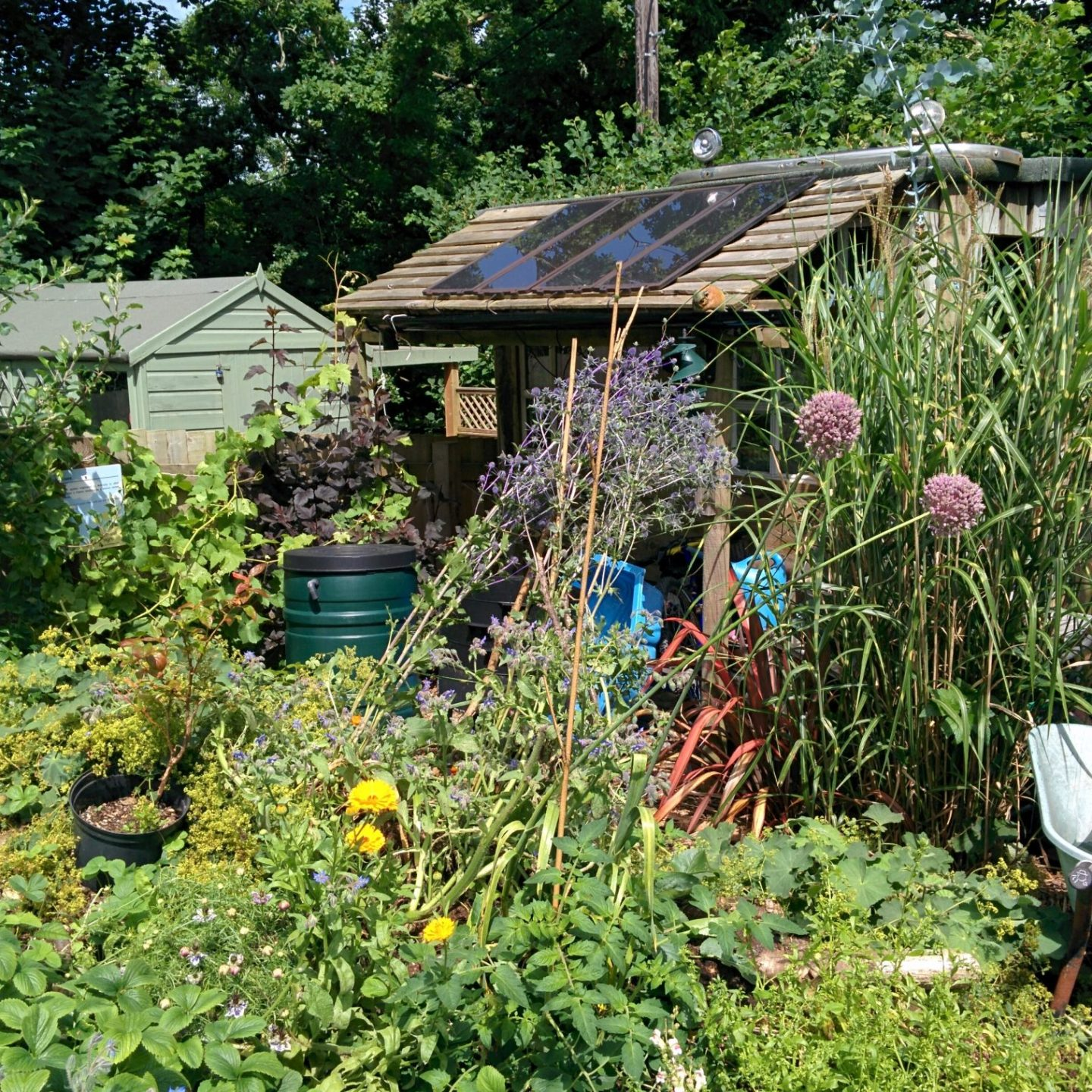 The New Garden shed build #gardening #shed #diy #woodworking