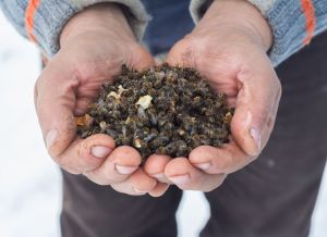 © Shutterstock_515559661 tote Bienen