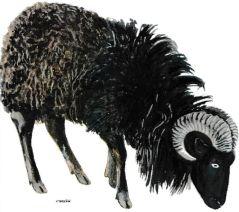 Magnétiseur mouton guérisseur Jacques