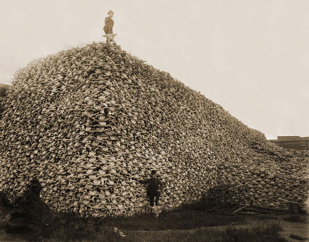 Image: Crânes de bisons, USA