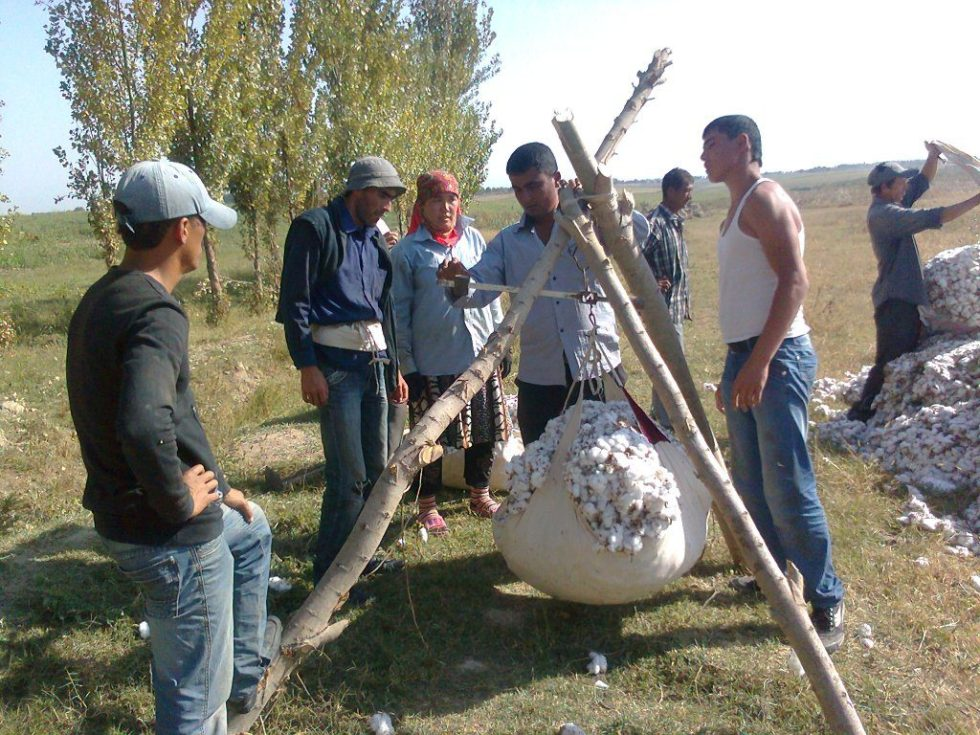 Weighing cotton in Uzbekistan