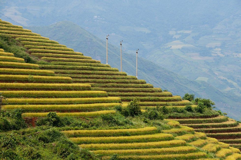 Terraced rice fields, Sa Pa, Vietnam