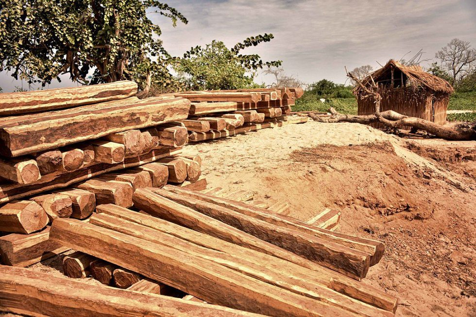 Cutting wood from the forest in Madagascar