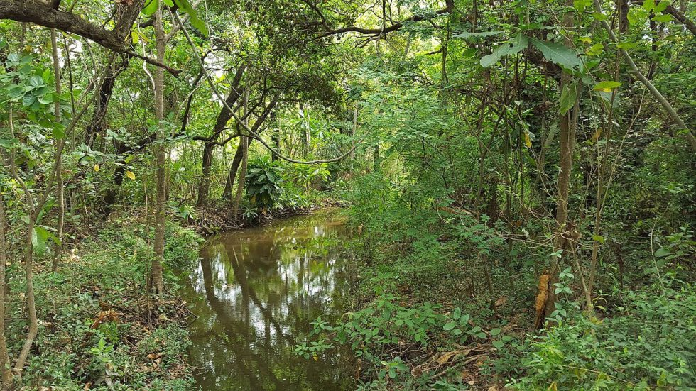 Umkomaas Forest is near Durban on the east part of South Africa.