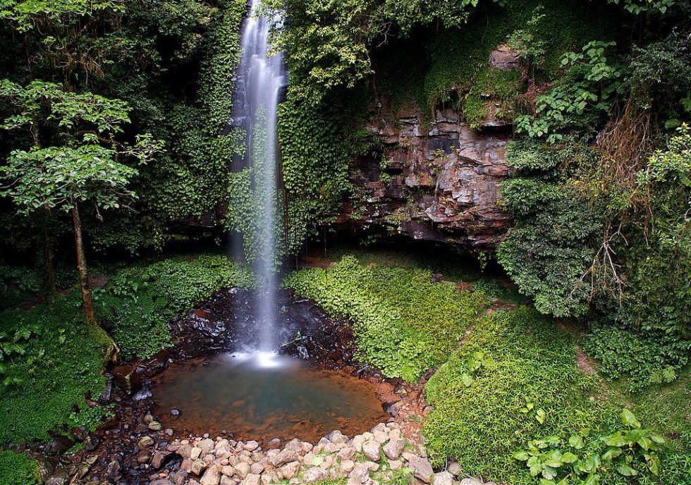Dorrigo Rain forest National Park, Coffs Harbour, NSW. Australia