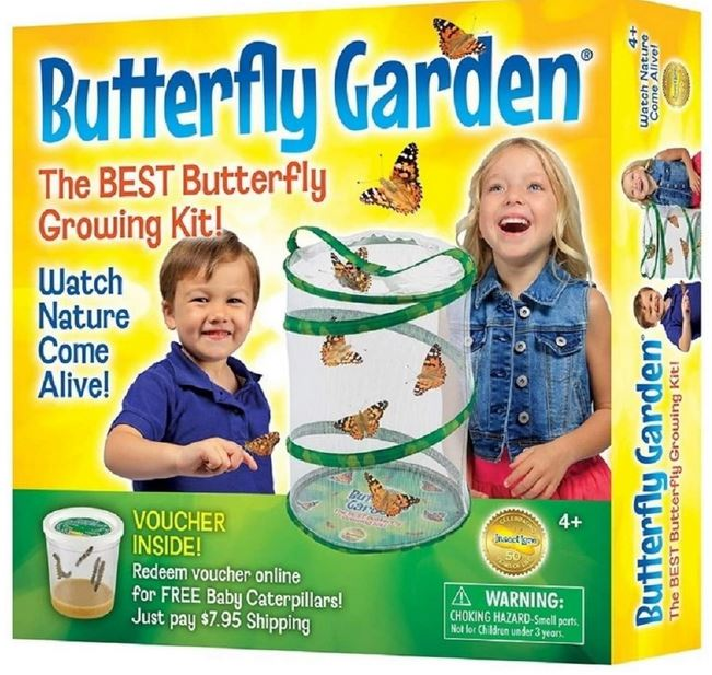 Insect Lore butterfly kit
