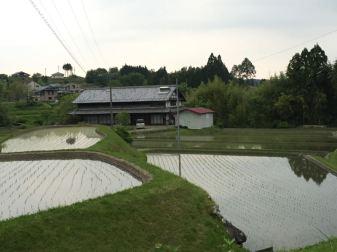 paddy-field iwamura