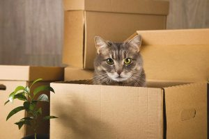 pro-packing-tips-moving