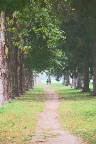 """""""Pathway through the Leaves"""", Past, Blaire Walmsley, GCVI, Honourable Mention"""
