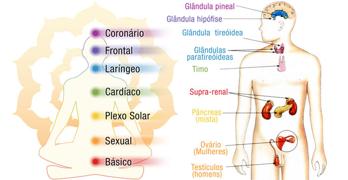 yoga-glandulas-saude-chacras-chakras-corpo etérico