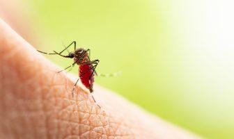 isco-de-morte-por-febre-amarela-pode-ser-identificado-mais-cedo