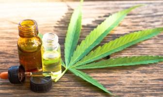 cannabis-dicol-delibera-sobre-plantio-e-registro