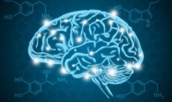 serotonina-o-que-e-e-quais-as-funções-no-corpo-humano
