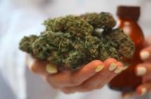 GFB-recebe-licenca-para-cultivo-producao-e-exportacao-de-cannabis-no-paraguai