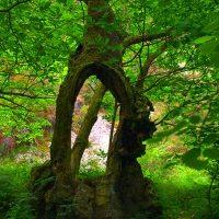 Ruta por el bosque de Beyu Pen... donde podremos reconocer seres mitológicos en los árboles y las rocas.