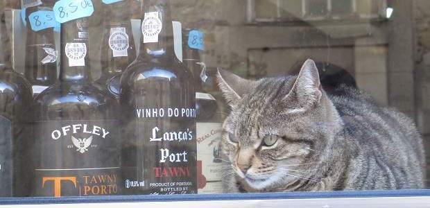 O que fazer em Porto, Portugal?
