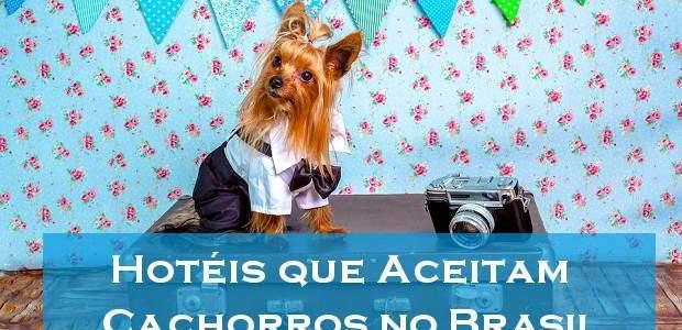 Hotéis que aceitam cachorros no Brasil!
