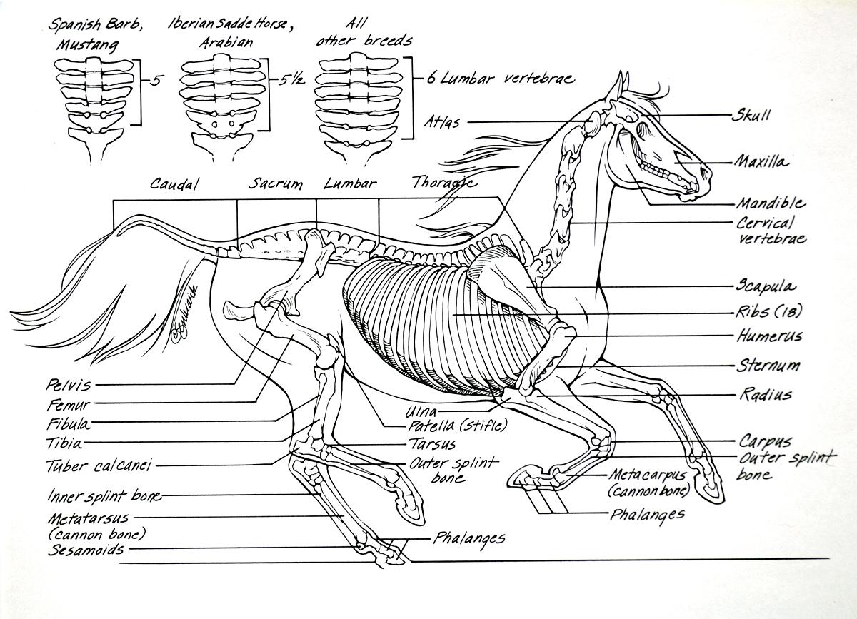 Diagrama Esqueleto