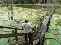 Parque Ecológico do Lago Janauari