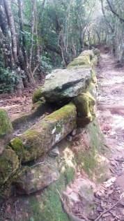 Bosque da Mãe D'Água