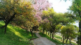 Parque Urquiza
