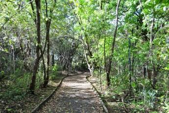 Bosque dos Papagaios