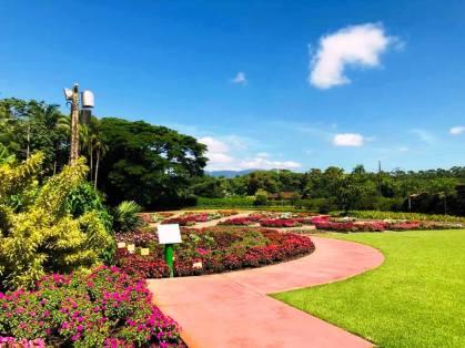 Jardim dos Hemerocallis (Agrícola da Ilha)