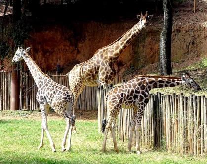 Zooparque