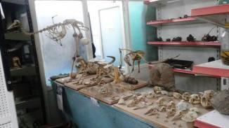 Museo El Tordillo