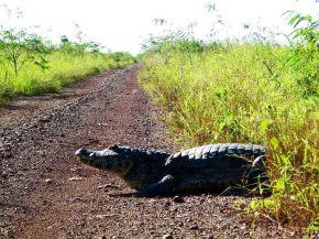 Pantanal Boliviano