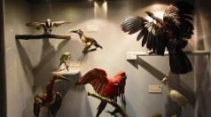 Museo de Historia Natural Alcide d'Orbigny/ foto Carlos Lopez