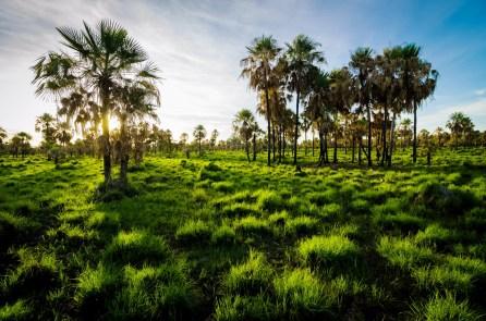 Parque Nacional Defensores del Chaco/ foto Kennon Bickhart
