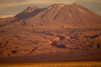 Desierto de Atacama/ foto Mike Reys