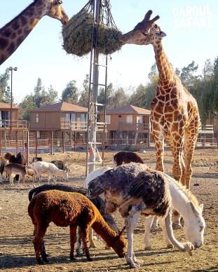 Parque Safari Chile