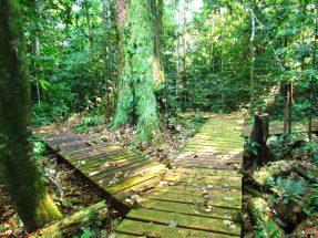 Parque Nacional da Amazônia