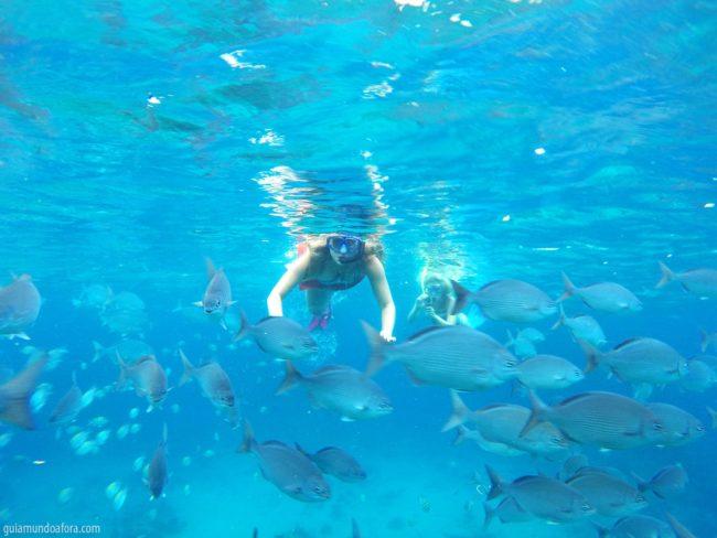 Snorkel nas praias em Barbados