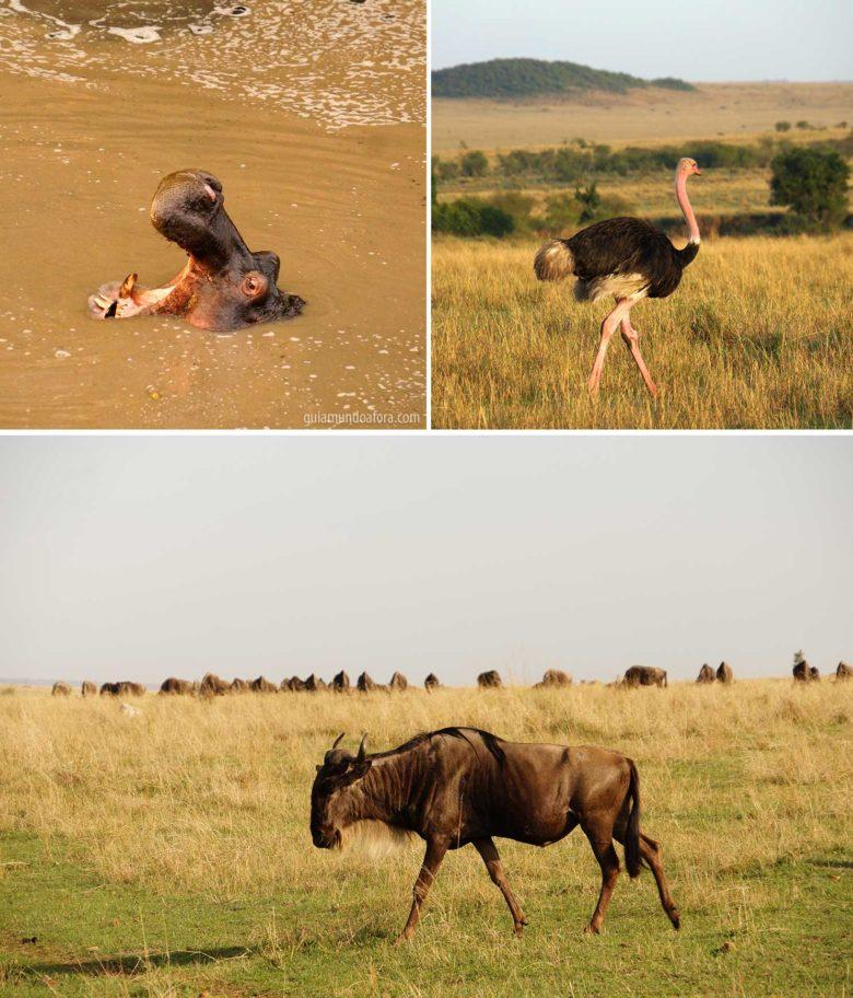 safári no Quenia