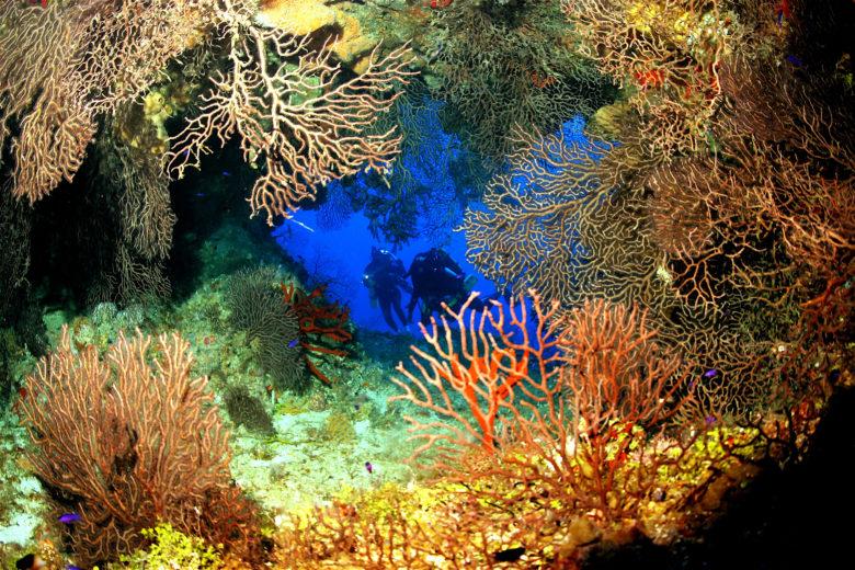 mergulho nas Ilhas Cayman