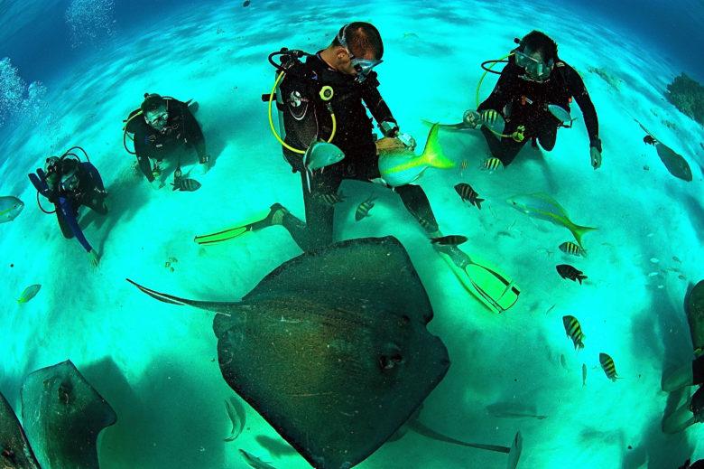 praticar mergulho em Stingray City nas Ilhas Cayman