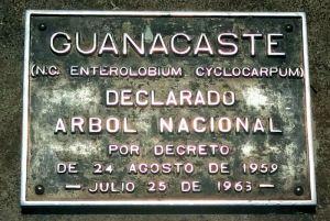 El Guanacaste - Árbol Nacional