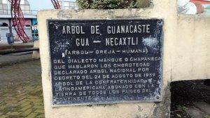 Árbol de Guanacaste