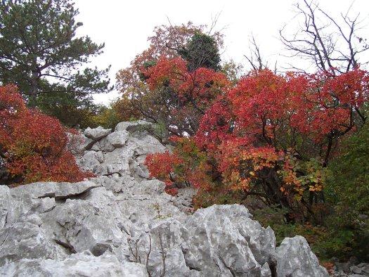 Carso a Duino autunno festival vento e pietra energia dei luoghi