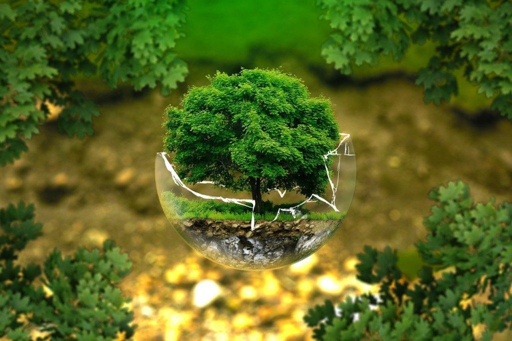 Tutela dell'ambiente, foto da Pixabay