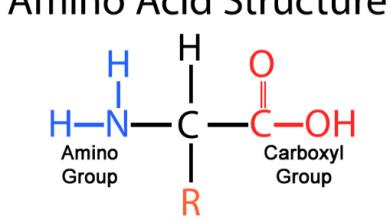 amino acid formula