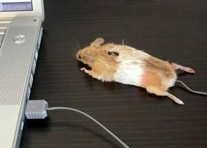 Pourquoi acheter une souris de jeu