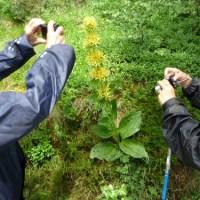 Randonnées pédestres en Auvergne
