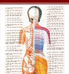get quotations acupoints along the spine related diseases and dermatolyphic hanging poster panels hospital chart diagram schematic diagram [ 800 x 1067 Pixel ]