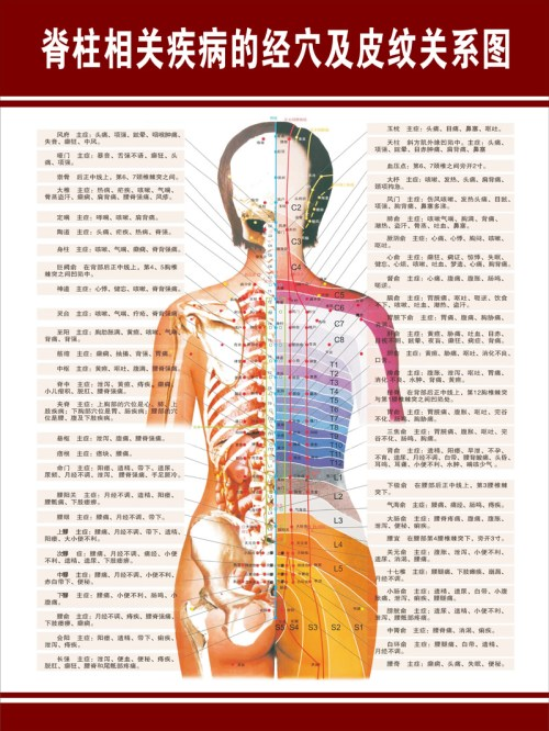 small resolution of get quotations acupoints along the spine related diseases and dermatolyphic hanging poster panels hospital chart diagram schematic diagram