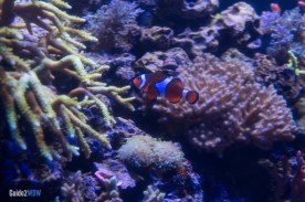 Clown Fish - The Seas with Nemo and Friends - Epcot Attraction
