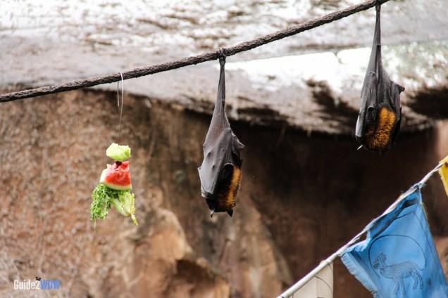 Bats - Maharajah Jungle Trek - Animal Kingdom Attraction